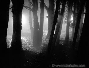 photo: http://anchorsholme.org.uk/2012/01/tidying-up/nite-tree-shadows-2-big-jpg/